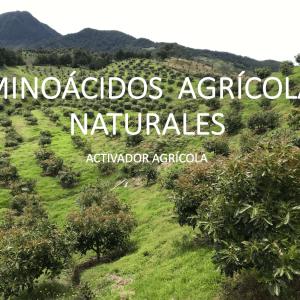 Aminoácidos agrícolas Agroactivo