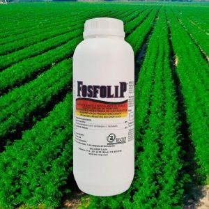 Penicillium janthinellum fosfolip