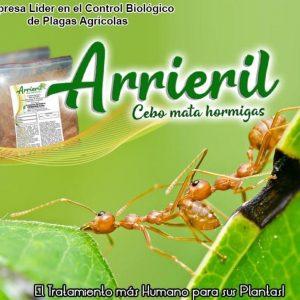 cebo para hormigas arrieril