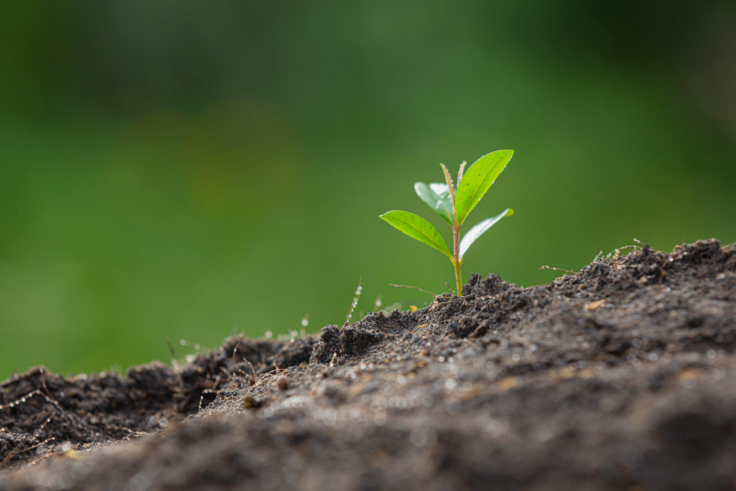 La materia orgánica en el suelo